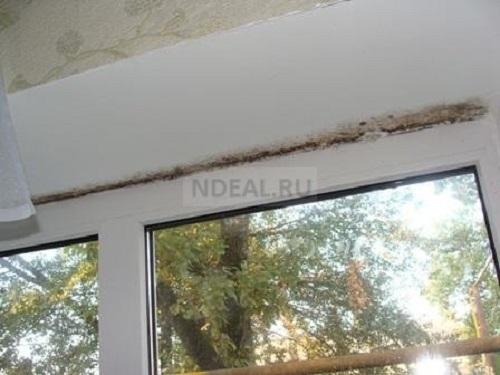 плесень на окнах